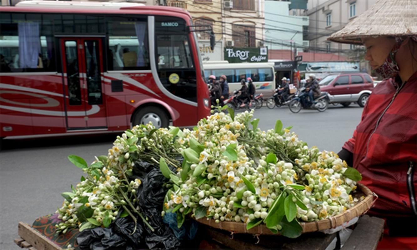 Anh: Nong nan hoa buoi ngat huong pho Ha Noi-Hinh-11