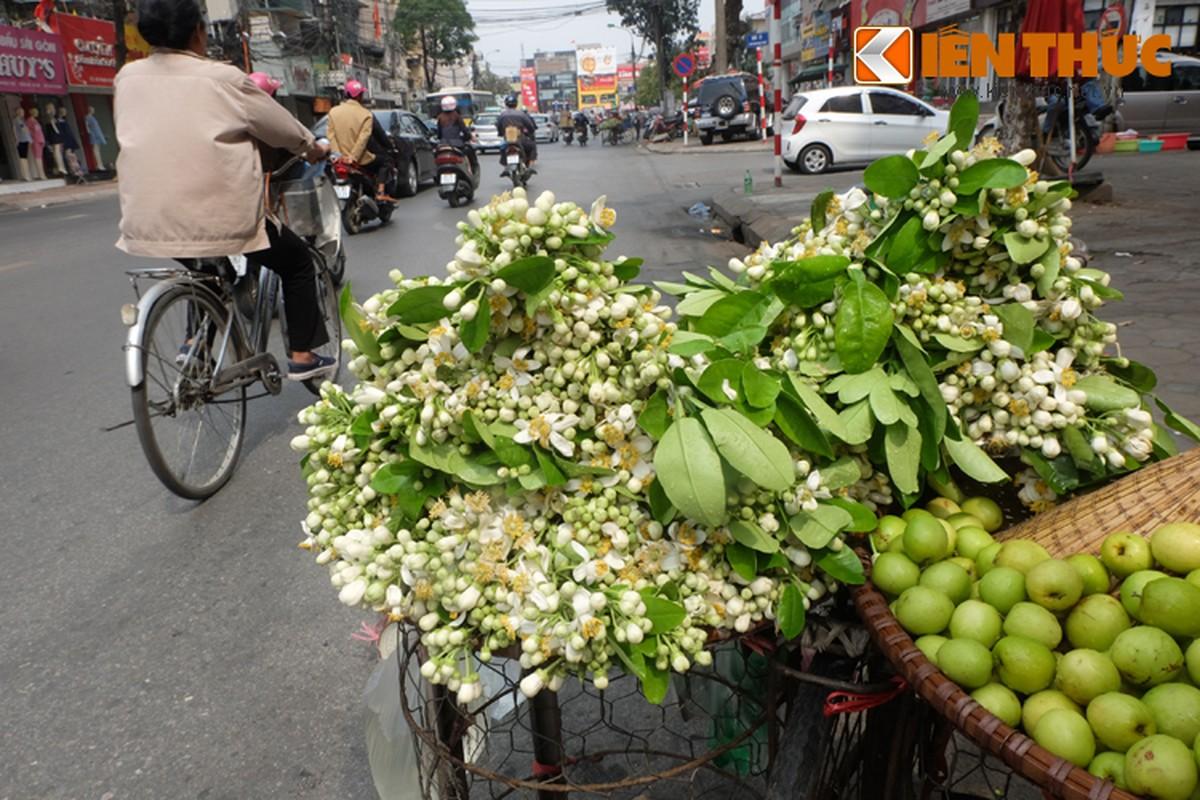 Anh: Nong nan hoa buoi ngat huong pho Ha Noi-Hinh-3