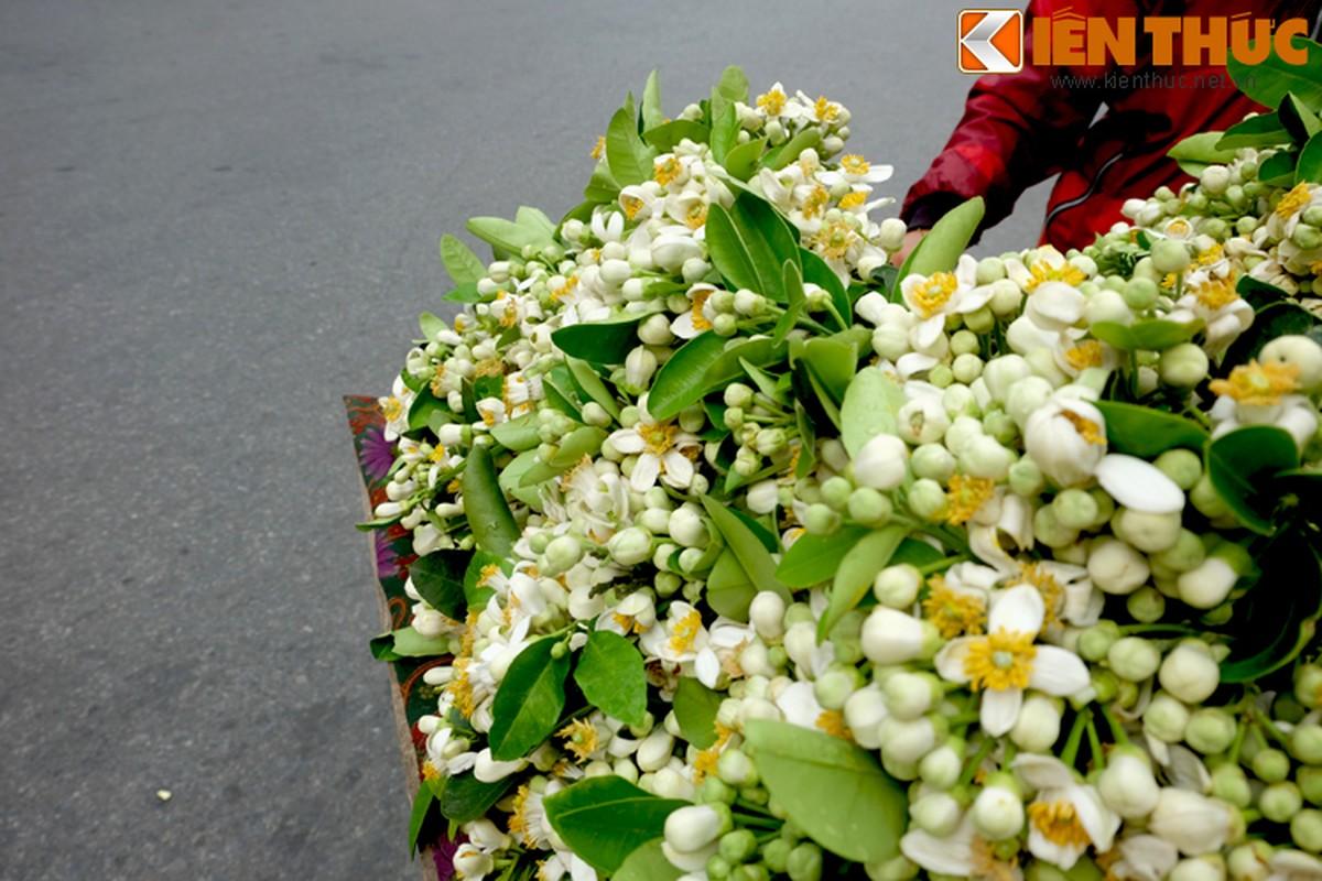Anh: Nong nan hoa buoi ngat huong pho Ha Noi-Hinh-7