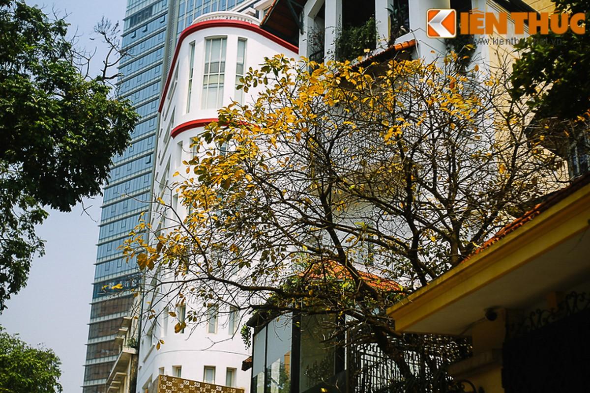 Anh: Ha Noi dep nao long mua cay thay la-Hinh-16