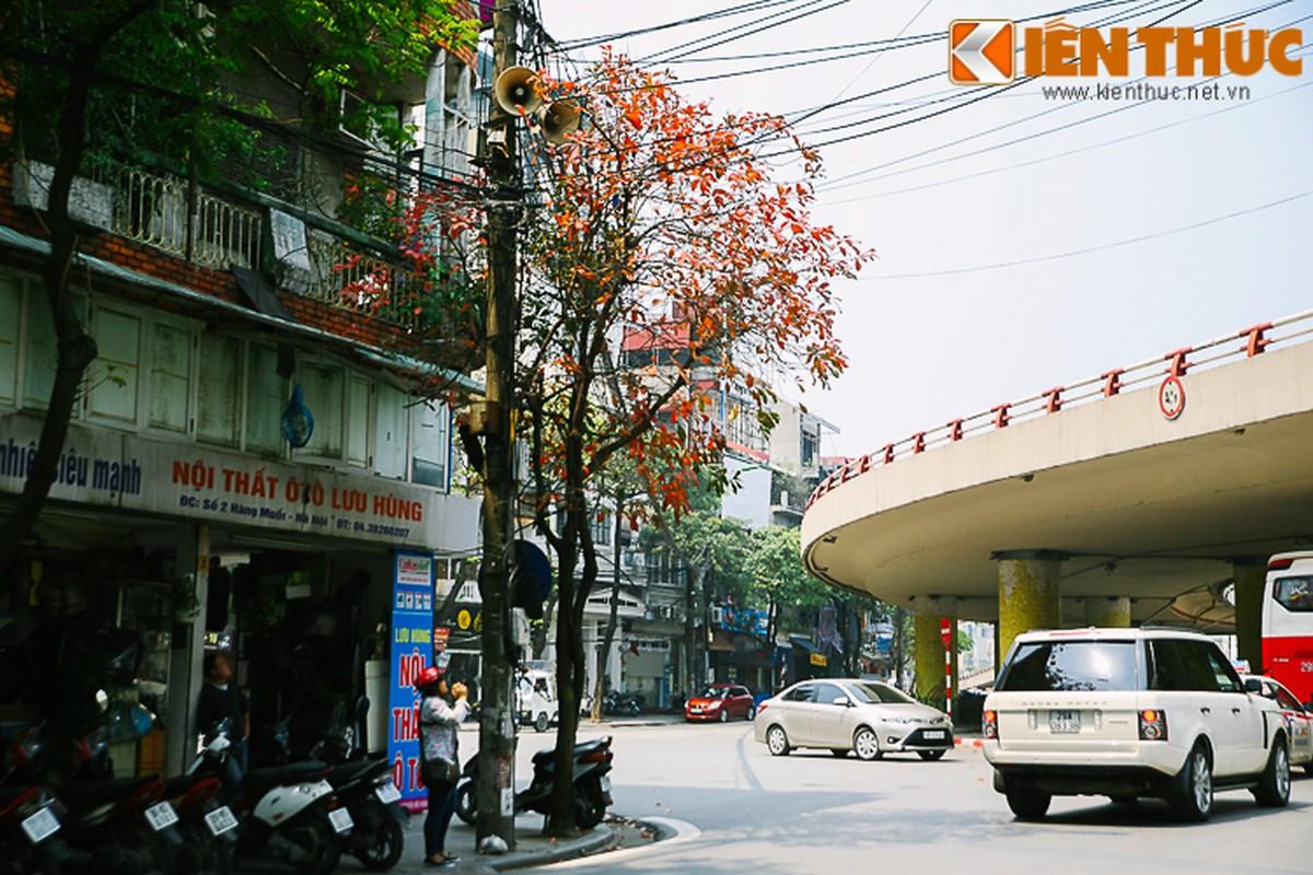 Anh: Ha Noi dep nao long mua cay thay la-Hinh-8