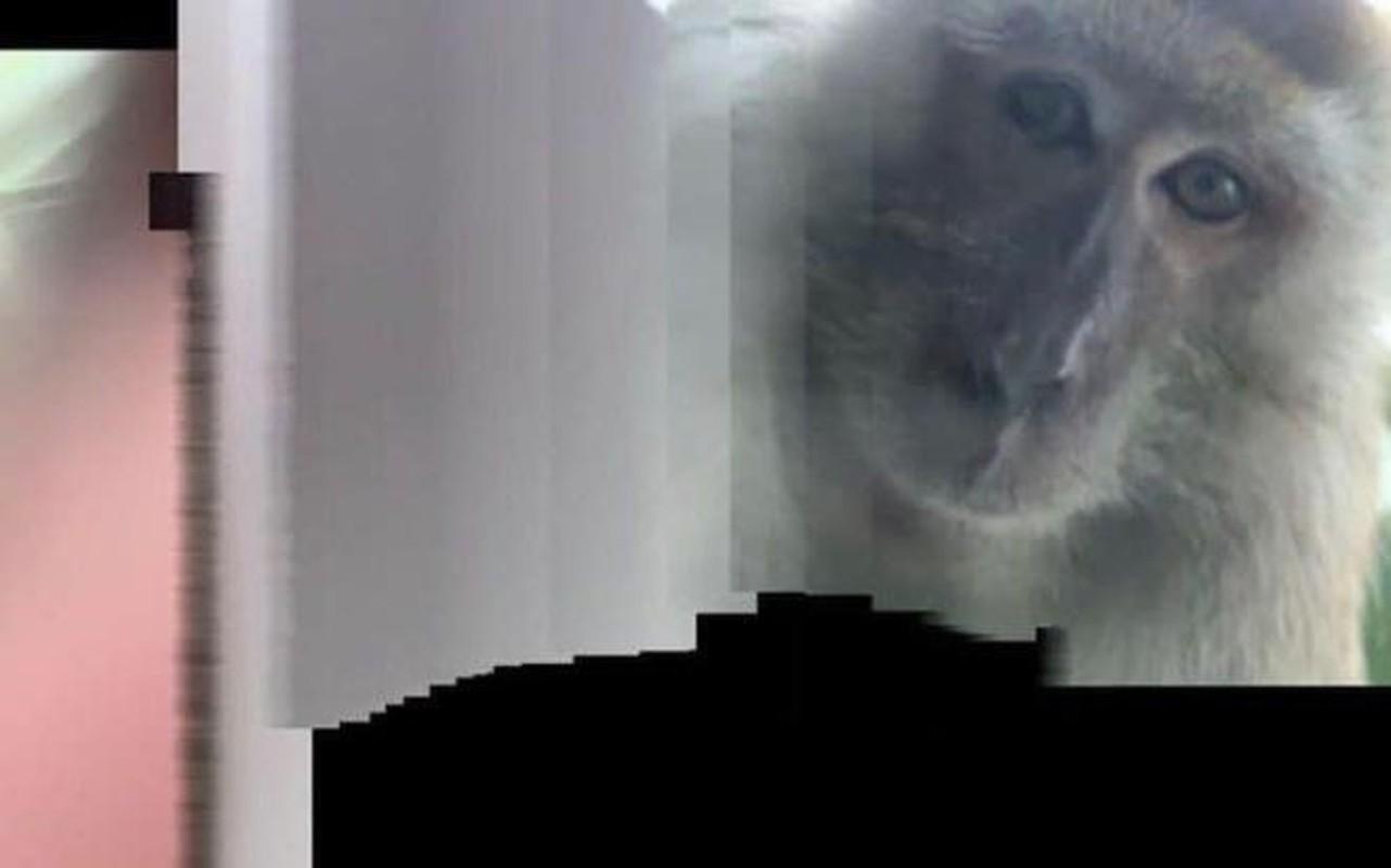 """Ta hoa phat hien anh selfie cua """"ke trom"""" trong iPhone bi danh cap-Hinh-10"""