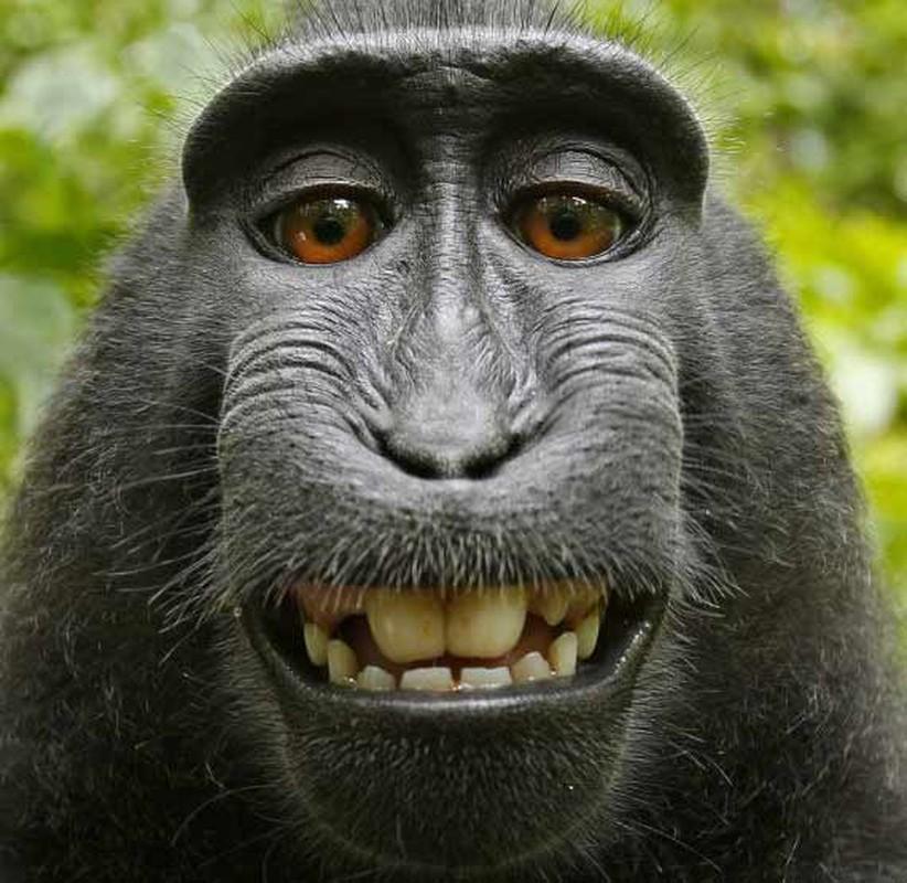 """Ta hoa phat hien anh selfie cua """"ke trom"""" trong iPhone bi danh cap-Hinh-12"""
