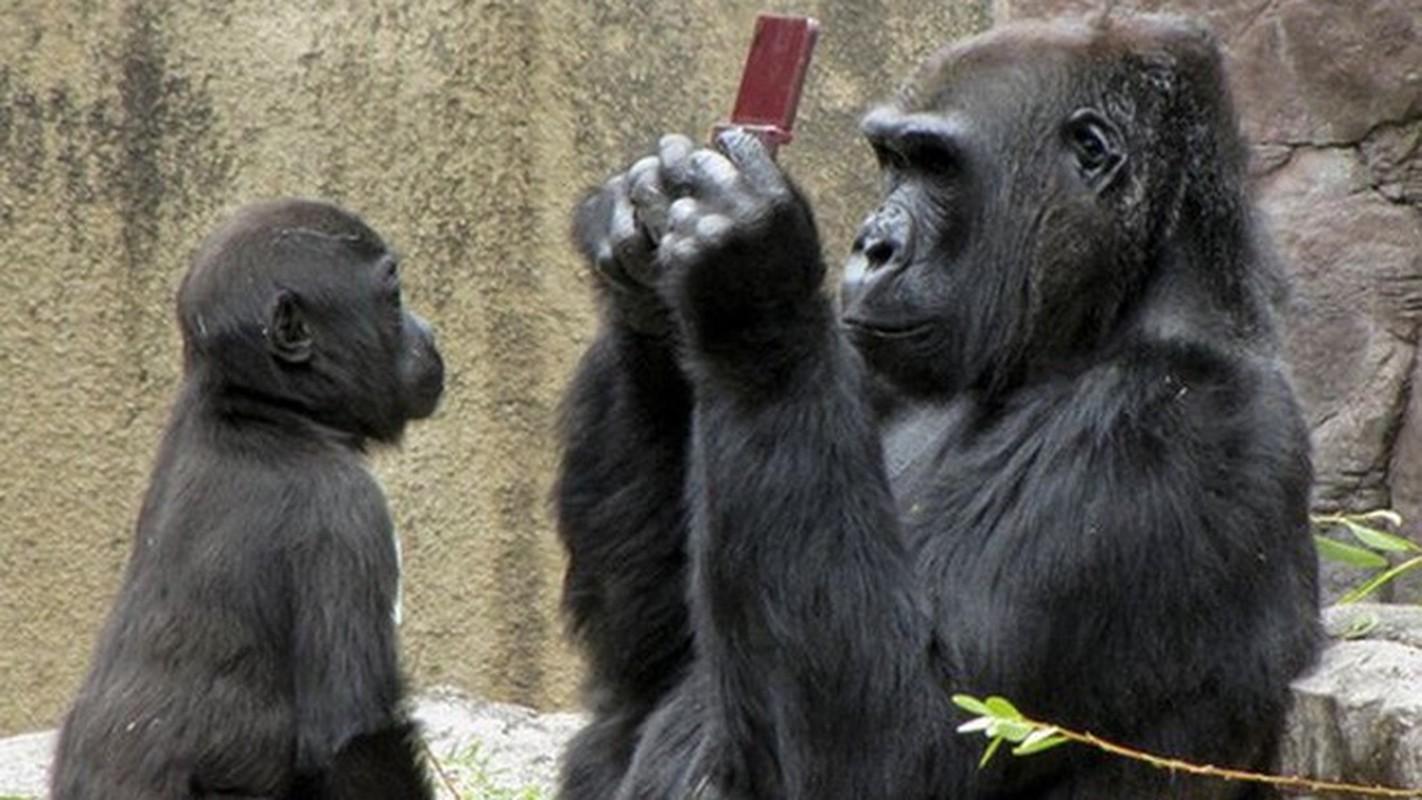 """Ta hoa phat hien anh selfie cua """"ke trom"""" trong iPhone bi danh cap-Hinh-13"""