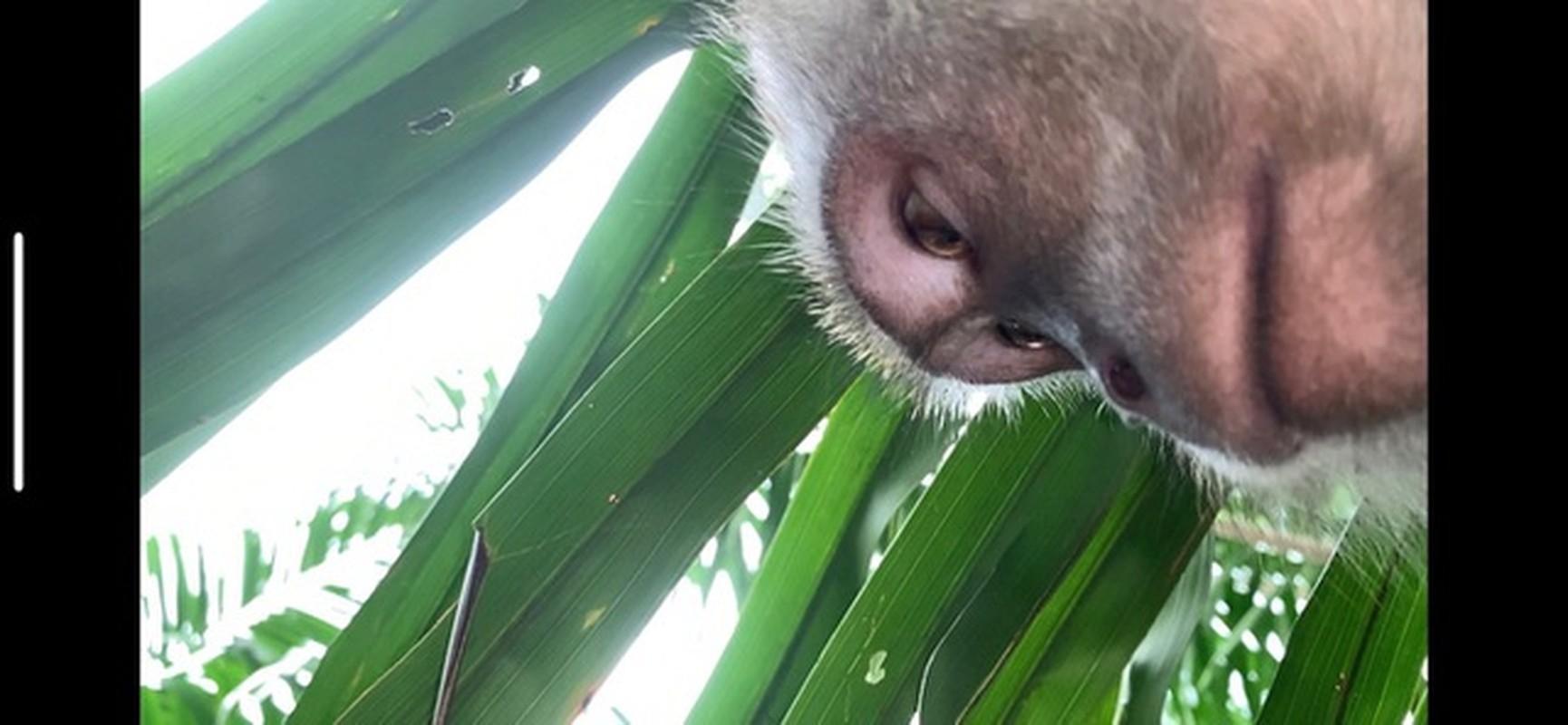 """Ta hoa phat hien anh selfie cua """"ke trom"""" trong iPhone bi danh cap-Hinh-7"""