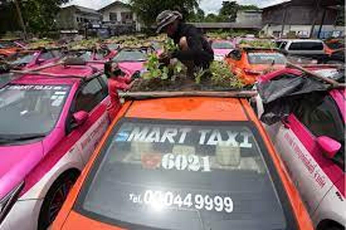 Thai Lan: Tai xe that nghiep mua dich trong cay tren noc xe-Hinh-10