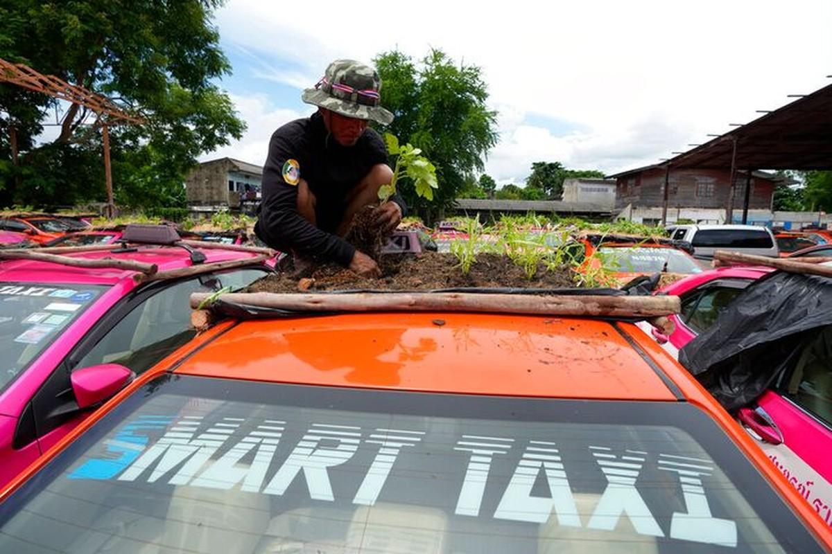Thai Lan: Tai xe that nghiep mua dich trong cay tren noc xe-Hinh-2
