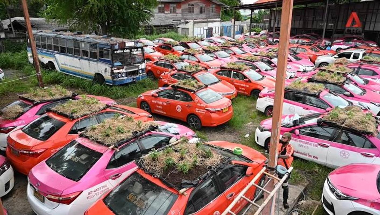 Thai Lan: Tai xe that nghiep mua dich trong cay tren noc xe-Hinh-4