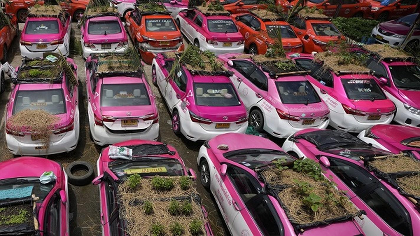Thai Lan: Tai xe that nghiep mua dich trong cay tren noc xe