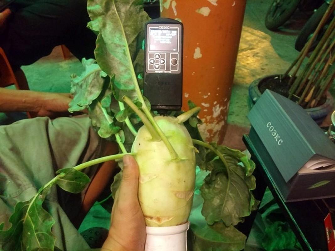 Vo dich Sai thanh: 1m² thu 40kg rau sach la chuyen thuong-Hinh-21
