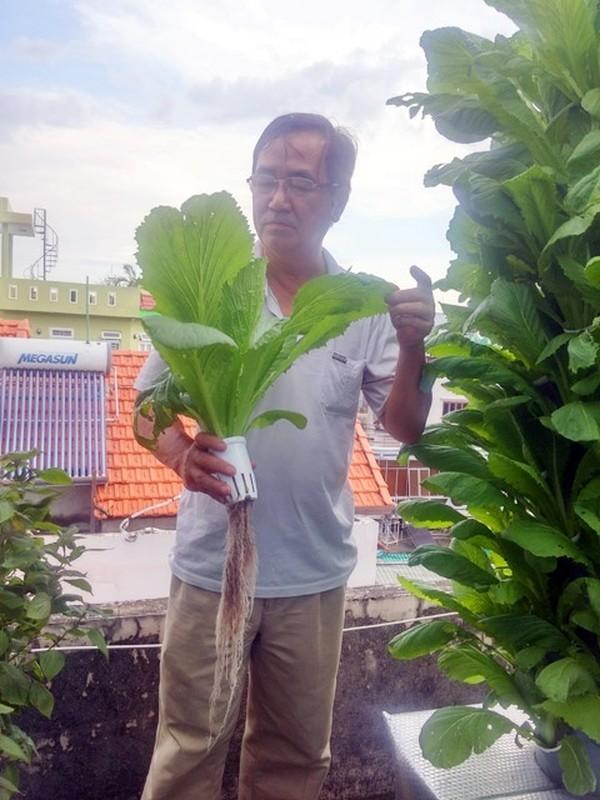 Vo dich Sai thanh: 1m² thu 40kg rau sach la chuyen thuong-Hinh-23