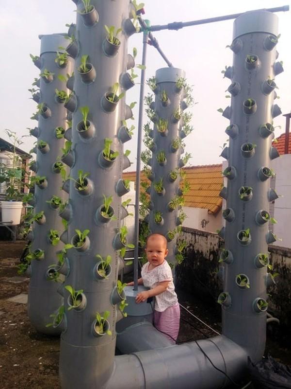 Vo dich Sai thanh: 1m² thu 40kg rau sach la chuyen thuong-Hinh-8