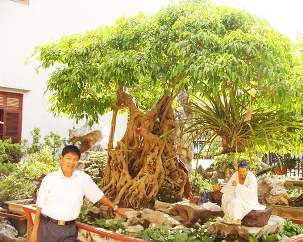 Loat cay canh gia tien ty tai Viet Nam-Hinh-6