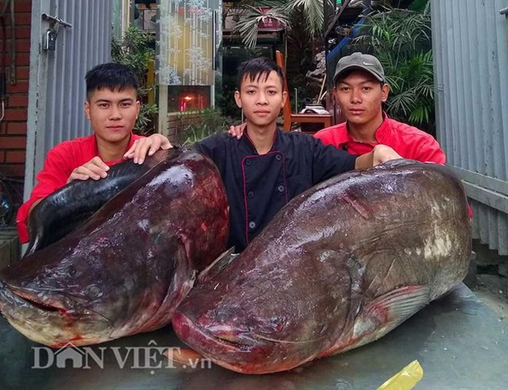 """Nha hang Ha Noi lai mo cap ca leo """"khung"""" phuc vu khach"""