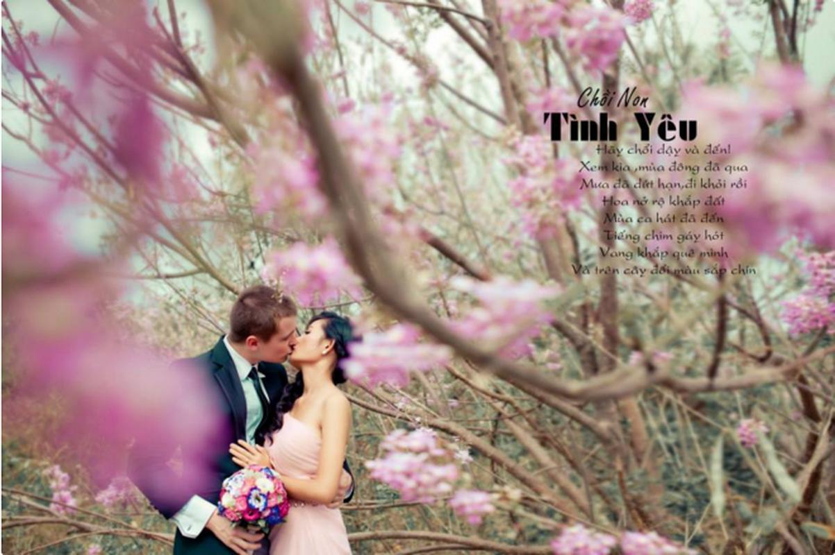 Ngam cung duong hoa anh dao tuyet dep tai Vung Tau-Hinh-7