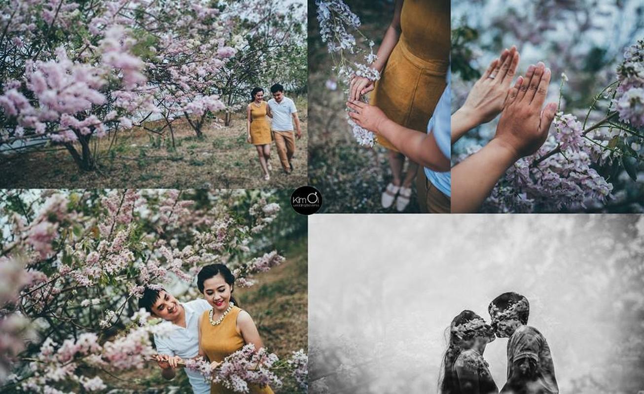 Ngam cung duong hoa anh dao tuyet dep tai Vung Tau-Hinh-9