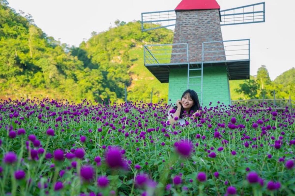 Thung lung hoa dep nhu mo o thien duong Moc Chau-Hinh-8
