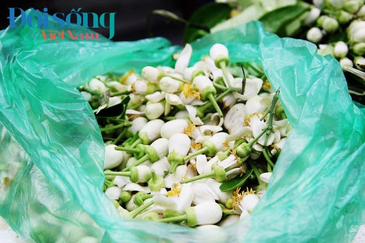 Hoa buoi xuong pho, moi chum hoa dat ngang bat pho-Hinh-11