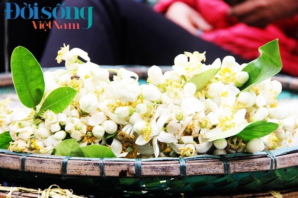 Hoa buoi xuong pho, moi chum hoa dat ngang bat pho-Hinh-12