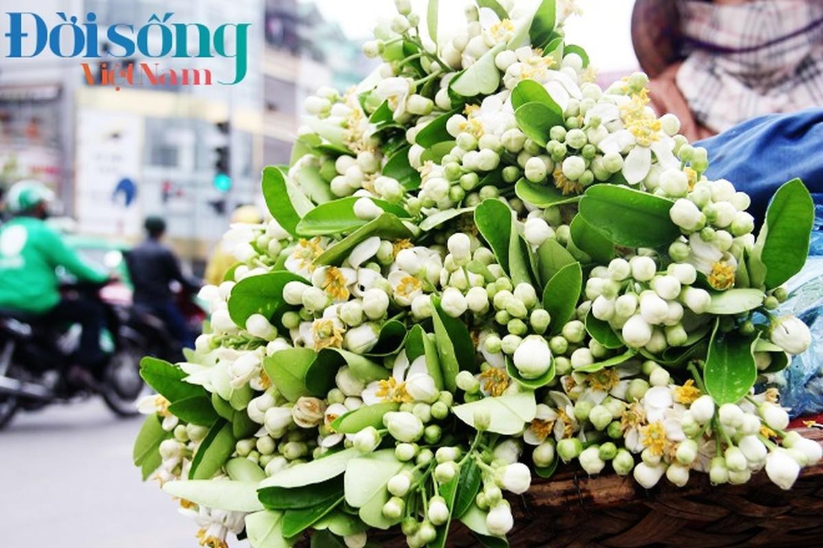 Hoa buoi xuong pho, moi chum hoa dat ngang bat pho-Hinh-3