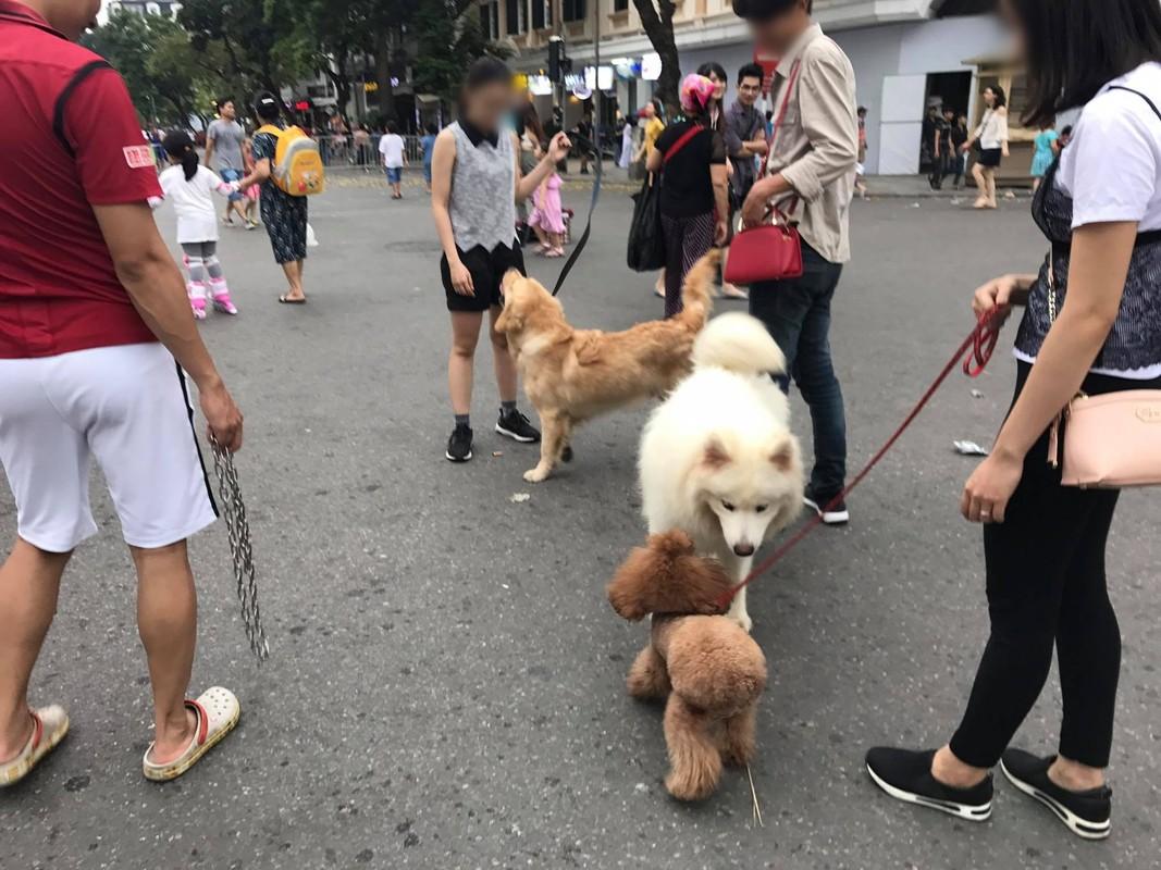 Cam mang cho khong ro mom vao pho di bo ho Guom, dan mang noi gi?-Hinh-8