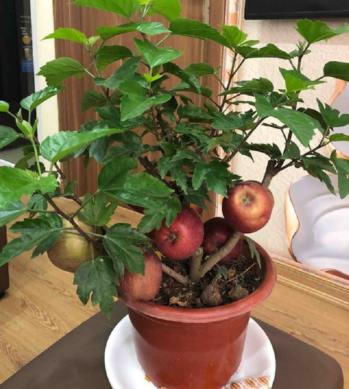 Sieu pham chi co o cho ngay Tet: Tao bonsai tren cay dam but-Hinh-3