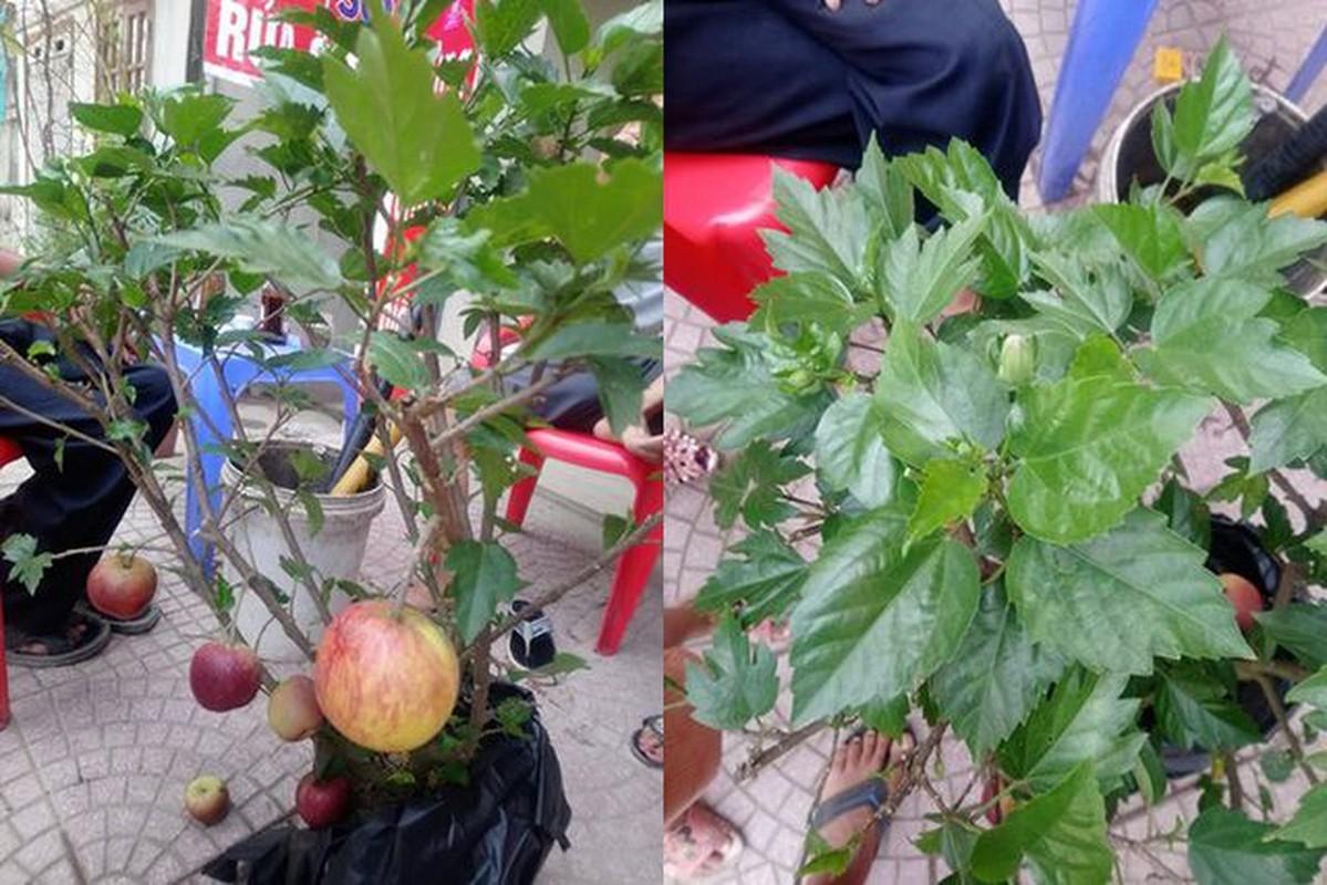 Sieu pham chi co o cho ngay Tet: Tao bonsai tren cay dam but-Hinh-6