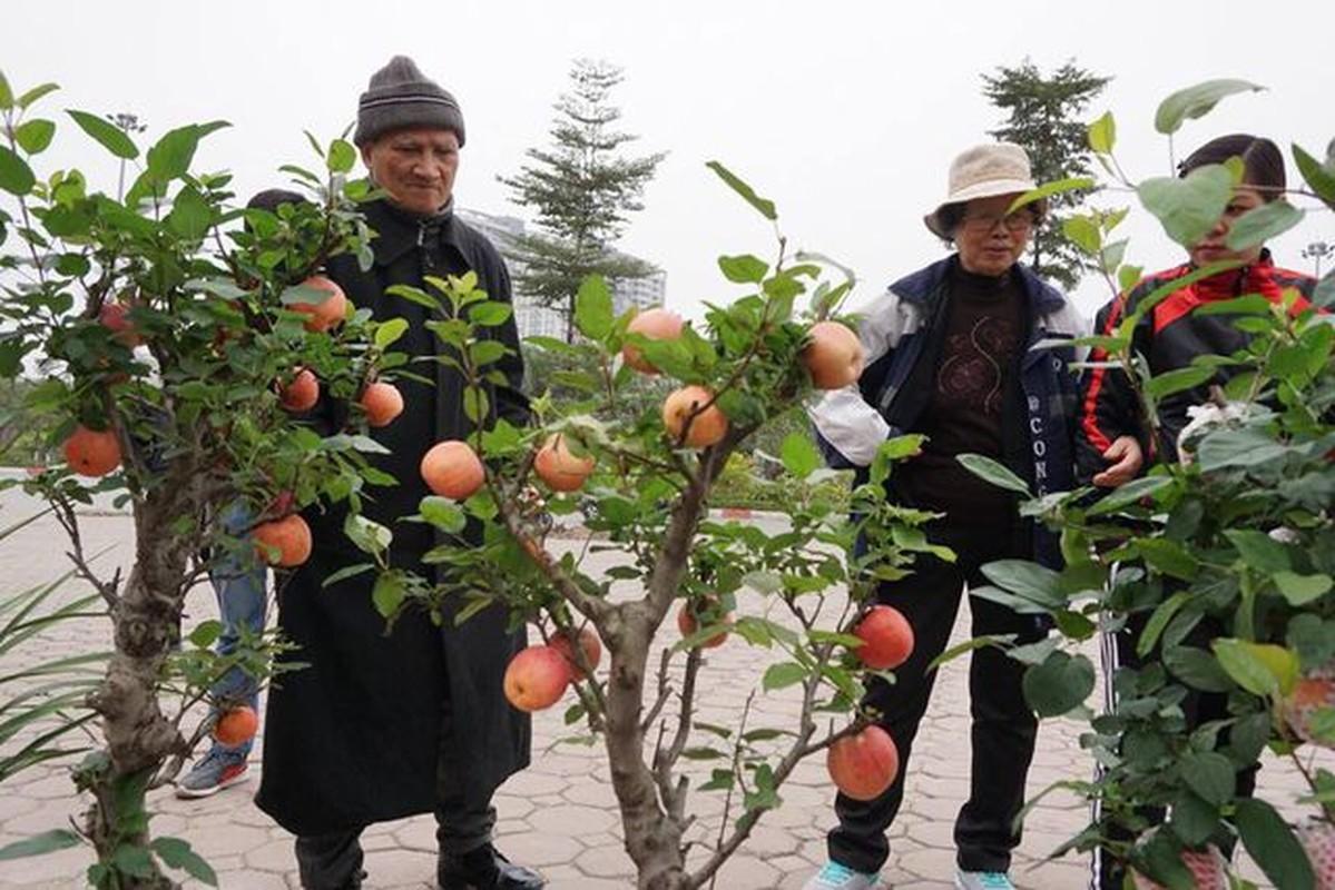 Sieu pham chi co o cho ngay Tet: Tao bonsai tren cay dam but-Hinh-8
