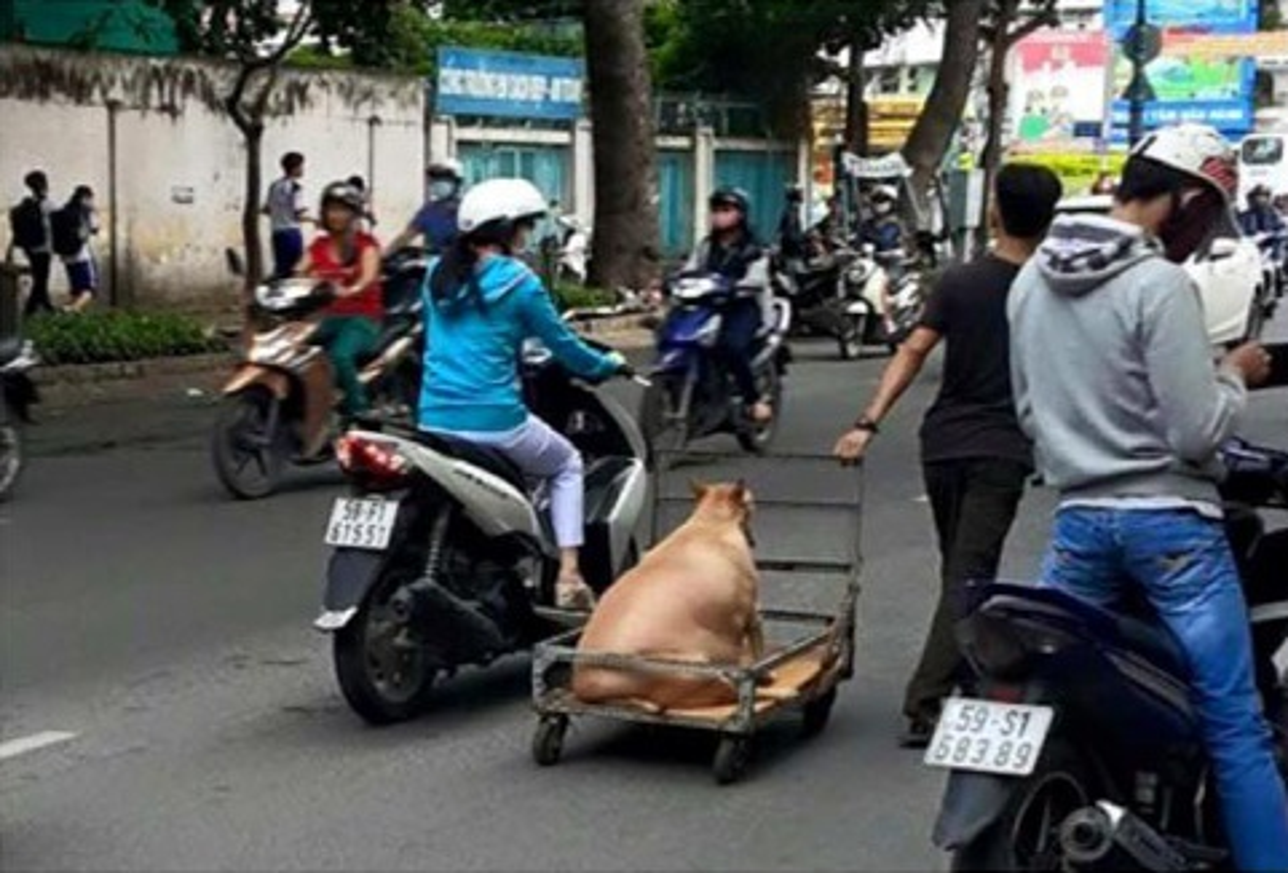 Chet cuoi voi nhung thu cung dau cho minh lon hot nhat mang xa hoi-Hinh-8