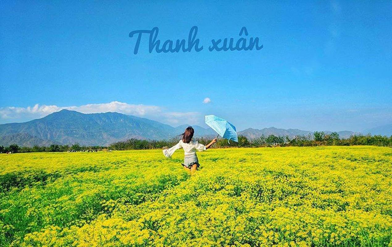 Me man canh dong thi la vang uom o Ninh Thuan dang do ra hoa-Hinh-10