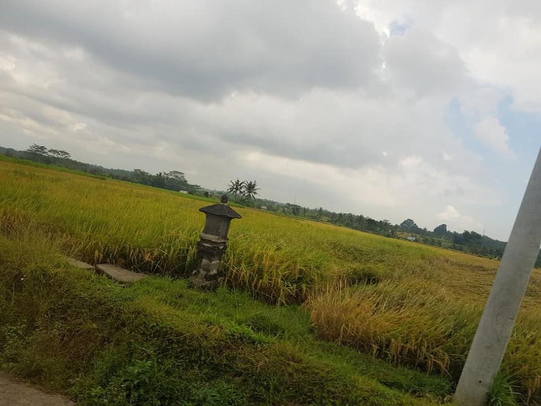 CDM tranh cai gay gat sau khi nu du khach Viet dang dan che Bali