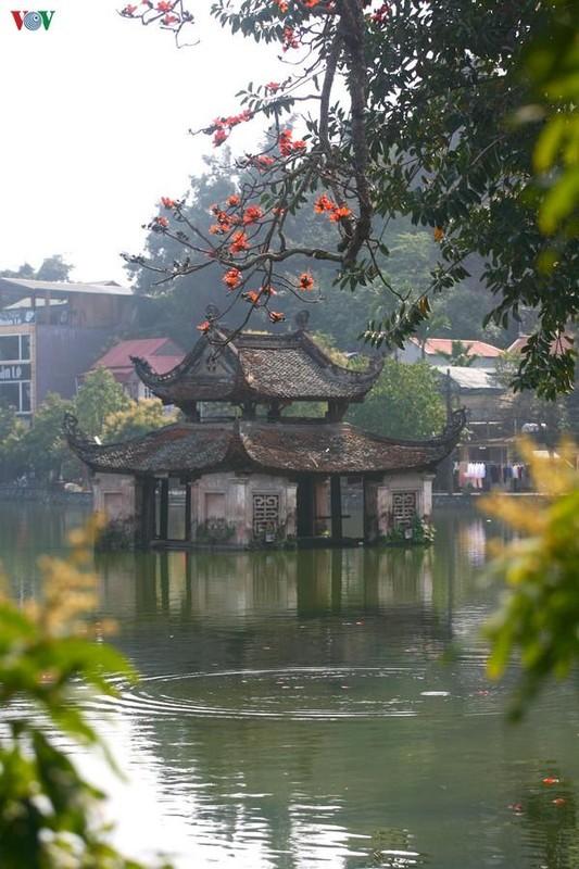 Vi sao cay hoa gao Chua Thay hut khach thap phuong do ve?-Hinh-10