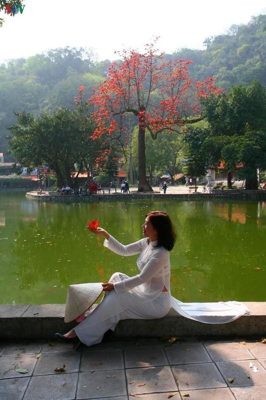 Vi sao cay hoa gao Chua Thay hut khach thap phuong do ve?-Hinh-2