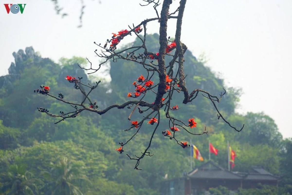 Vi sao cay hoa gao Chua Thay hut khach thap phuong do ve?-Hinh-8