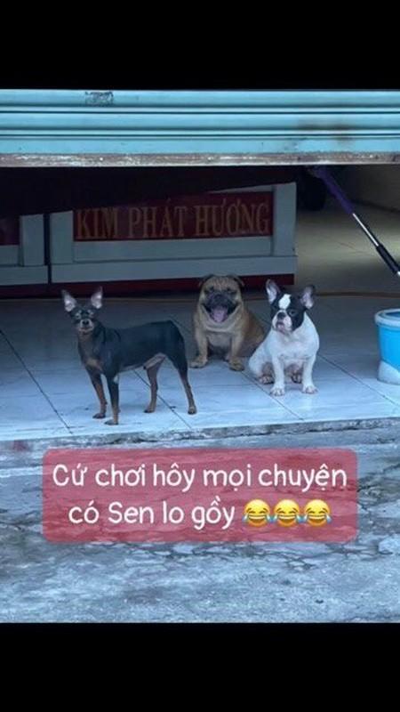 Danh do an cua nhan vien chong dich, 3 chu cho nhan cai ket-Hinh-7