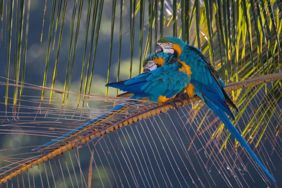Cao bac cuc di trong bao tuyet, chim bac ma bay trong lanh gia-Hinh-12