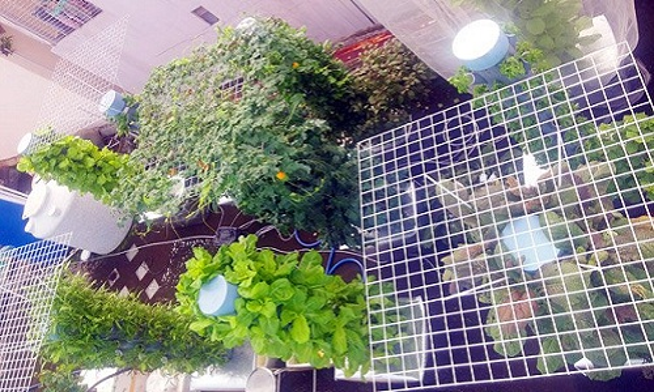 Kinh ngac vuon rau trong nha khung nhat Sai Gon: 1m² thu 40kg rau