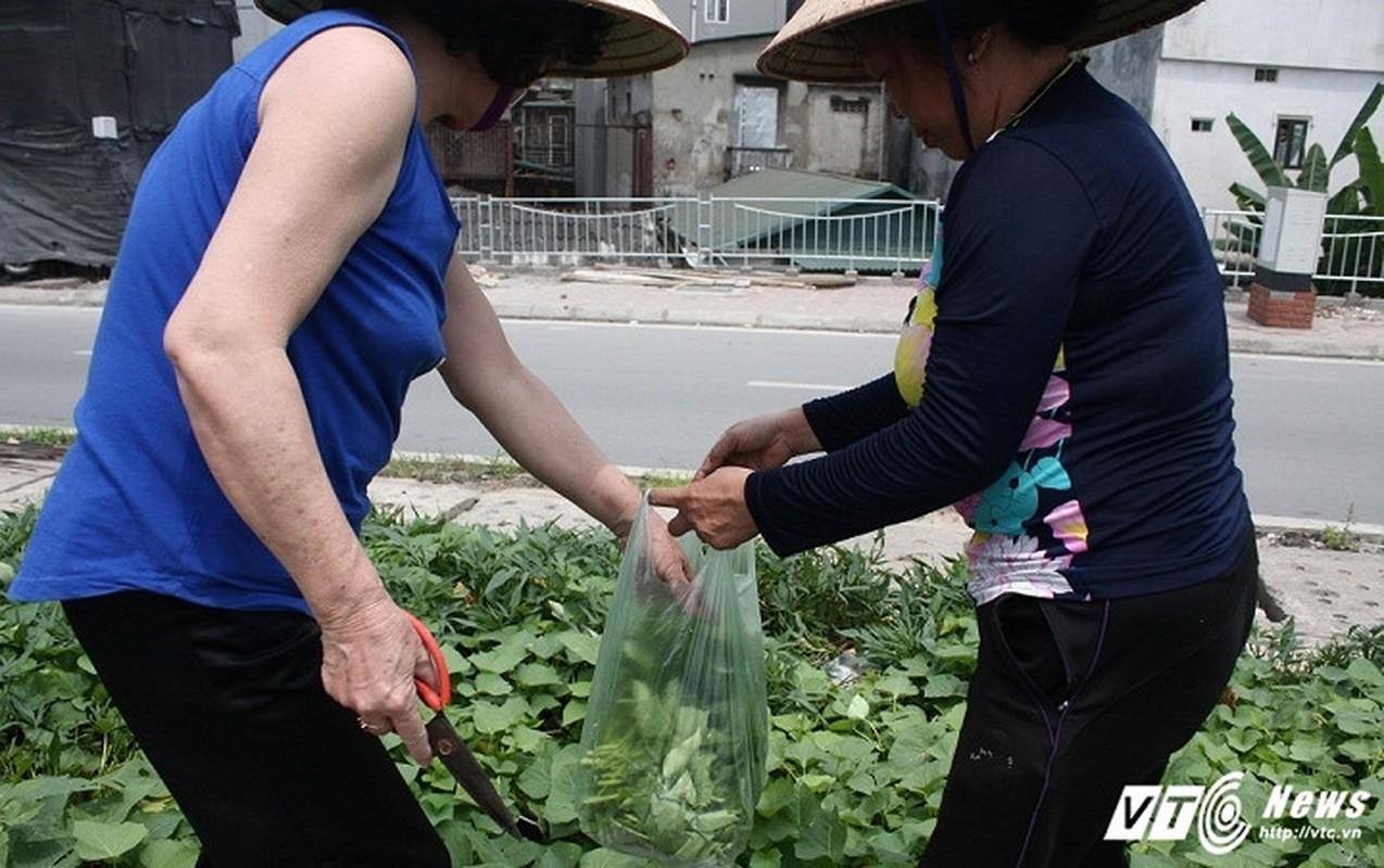 Vuon rau xanh trong hoc be tong doc nhat vo nhi o Ha Noi-Hinh-10