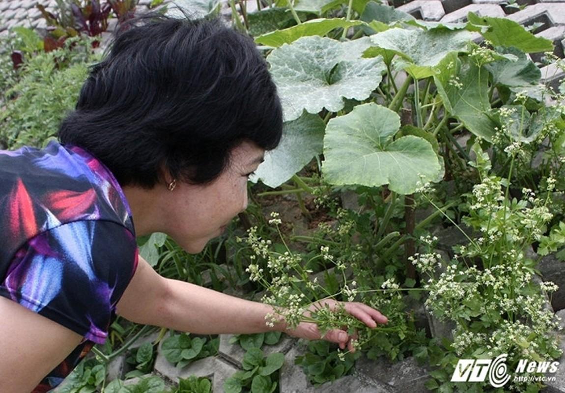 Vuon rau xanh trong hoc be tong doc nhat vo nhi o Ha Noi-Hinh-11