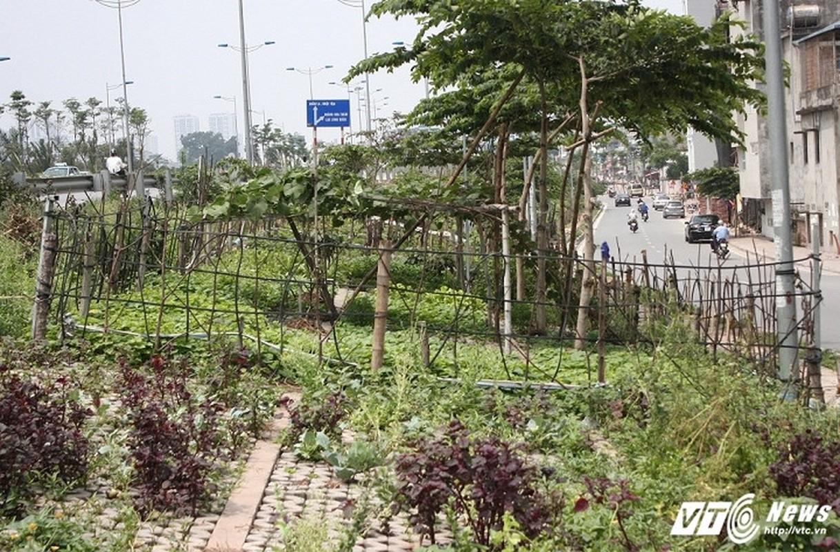 Vuon rau xanh trong hoc be tong doc nhat vo nhi o Ha Noi-Hinh-2