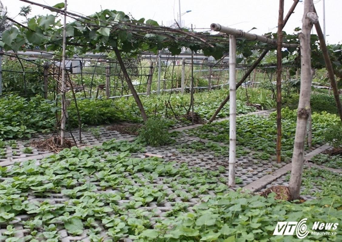 Vuon rau xanh trong hoc be tong doc nhat vo nhi o Ha Noi-Hinh-5