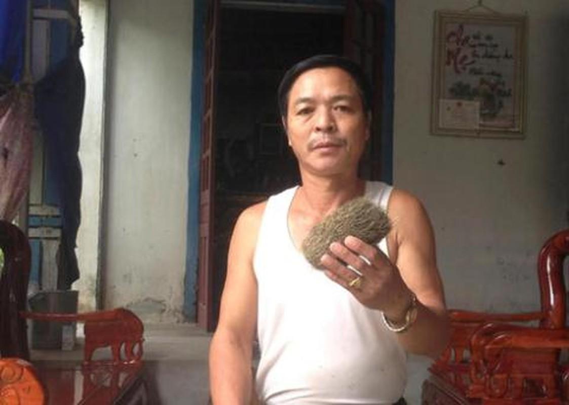 Kinh ngac loat cat lon gia chat duoc dai gia san lung-Hinh-5