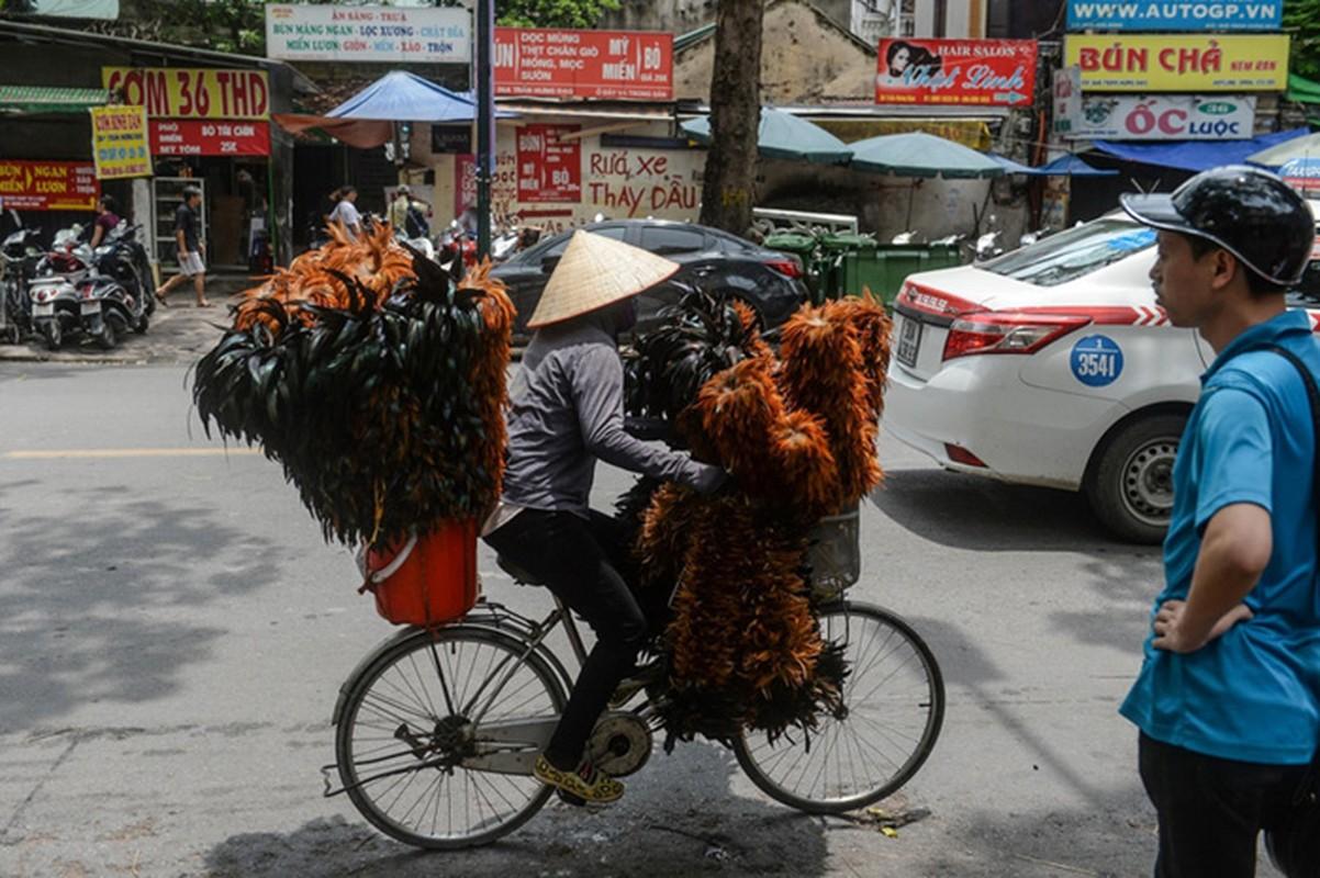 Cuoc chien ton tai khoc liet cua choi long ga Viet-Hinh-6