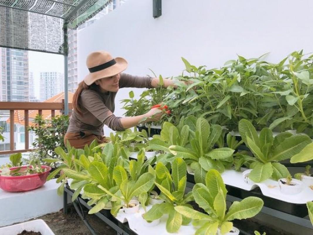 Nhung vuon rau xanh muot trong nha sao Viet o Sai Gon-Hinh-13