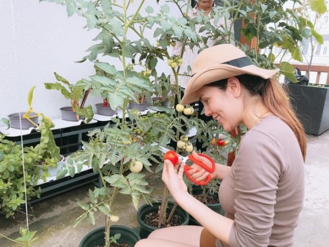Nhung vuon rau xanh muot trong nha sao Viet o Sai Gon-Hinh-14