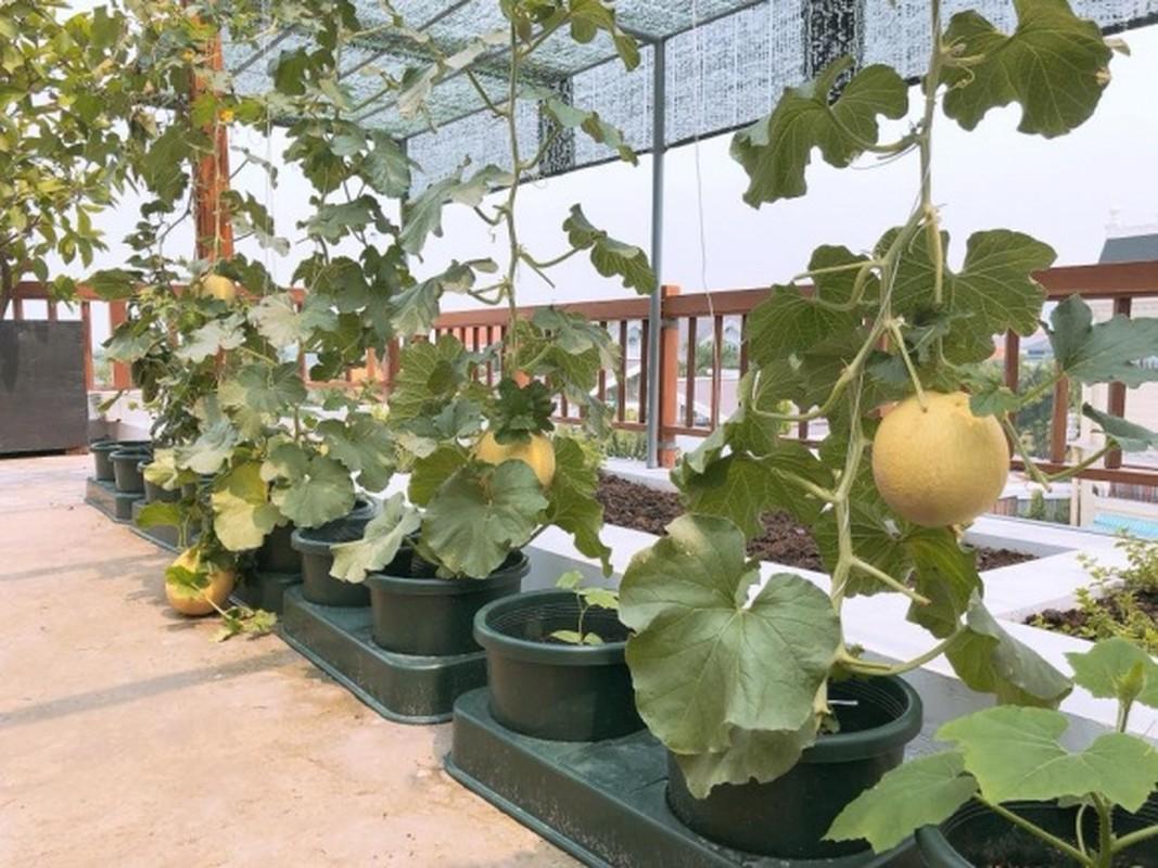 Nhung vuon rau xanh muot trong nha sao Viet o Sai Gon-Hinh-15