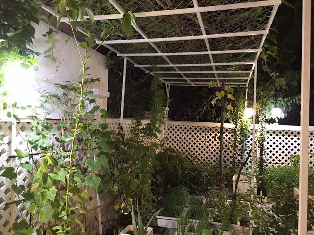 Nhung vuon rau xanh muot trong nha sao Viet o Sai Gon-Hinh-2