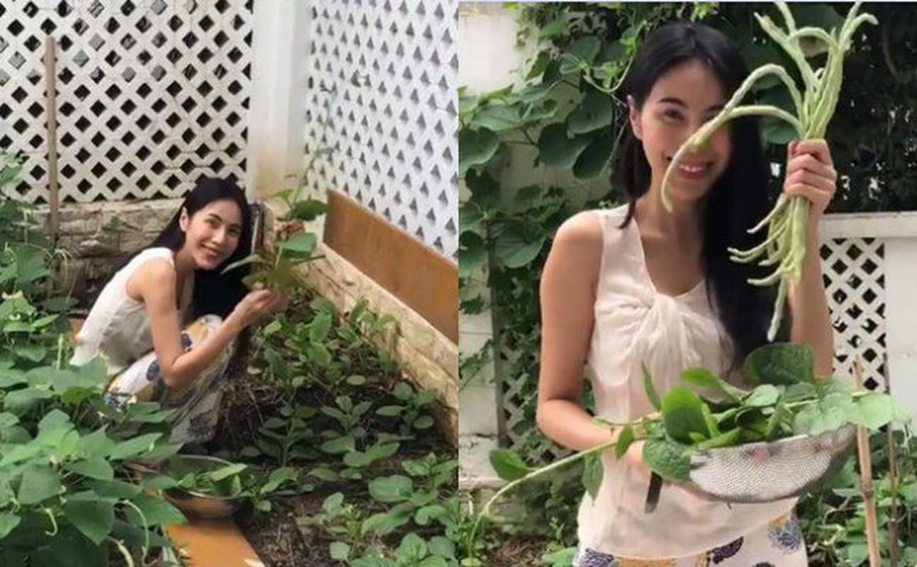 Nhung vuon rau xanh muot trong nha sao Viet o Sai Gon-Hinh-5