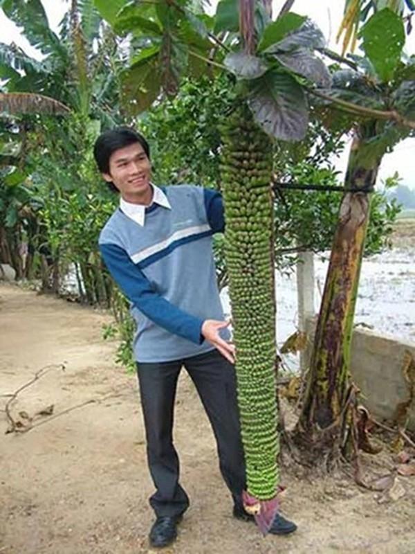 Kinh ngac nhung buong chuoi nghin qua cua nong dan Viet-Hinh-7