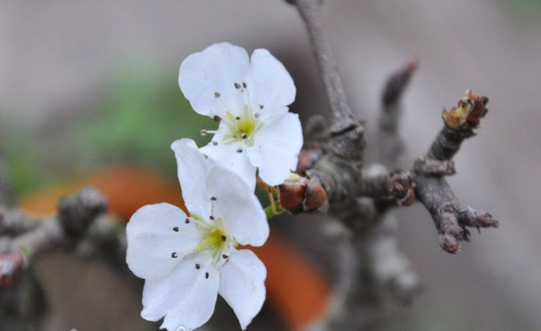 Thu choi hoa dat do cua nha giau Viet sau Tet Nguyen dan-Hinh-4
